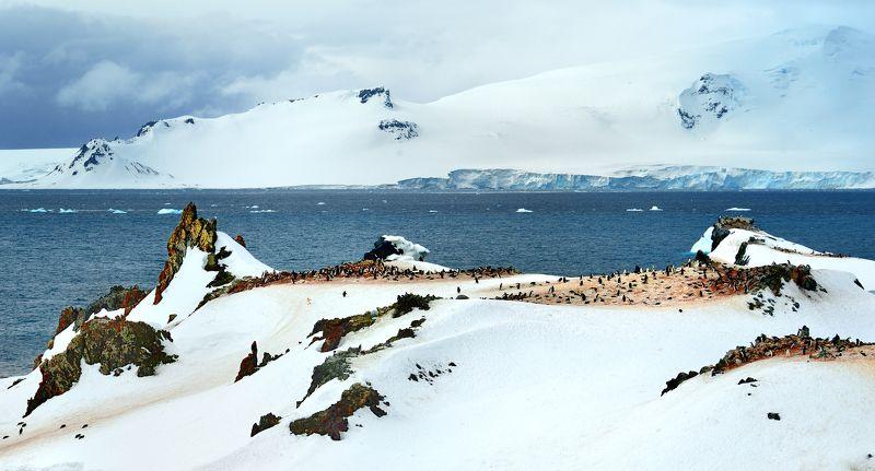 Колония пингвинов Чинстрапphoto preview