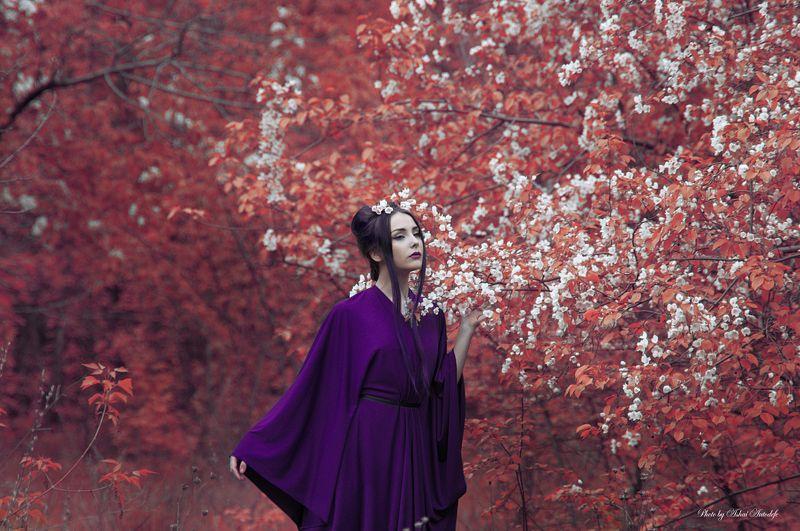 Blossom, Forest, Geisha, Japan, Redtrees Red blossomphoto preview