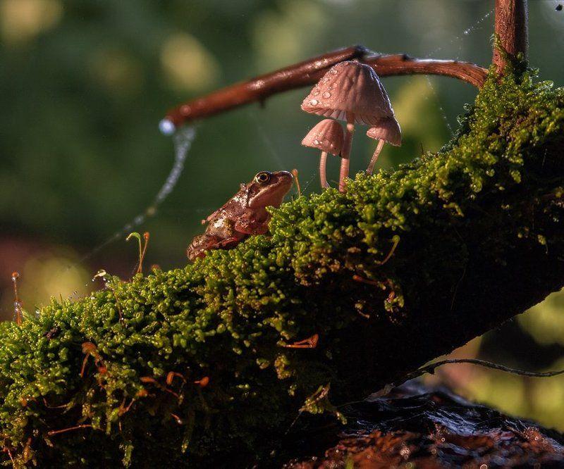 Лягушка, Макро Портрет с грибамиphoto preview