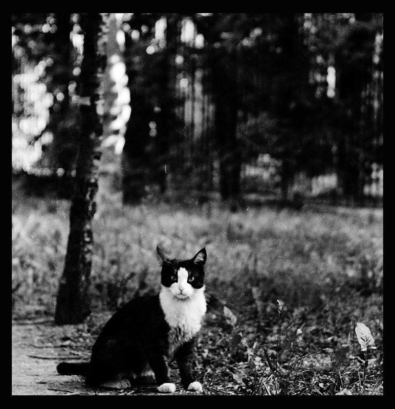 кошка, чб -photo preview