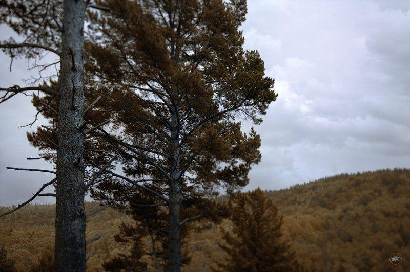 лес, яга, мрачно, облака, пугающе, осень, деревья, горы, листья, сухие, ветки, 45ts-e, художественная, съемка, обработка Лес бабы Ягиphoto preview