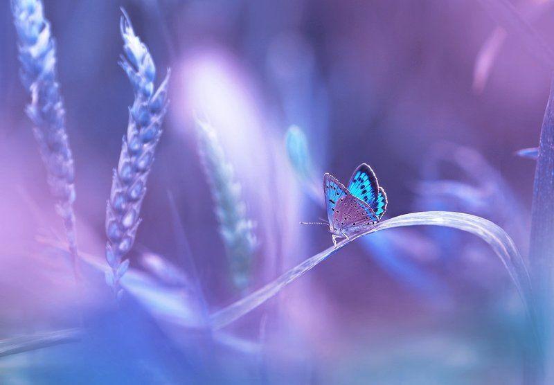 Сказочный мир бабочекphoto preview