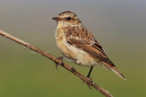 фото птиц в башкортостане рту здесь