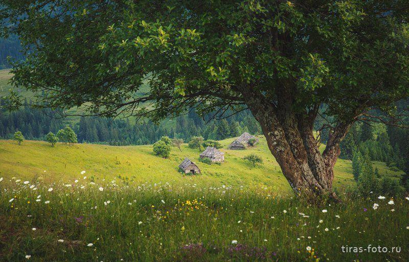 Карпаты, горы,  лето, дома Домишкиphoto preview