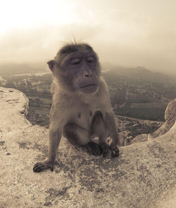 Хампи, ханнуман, Карнатака, Индия, обезьяна, сонная Sleepy monkey at Hannuman templephoto preview