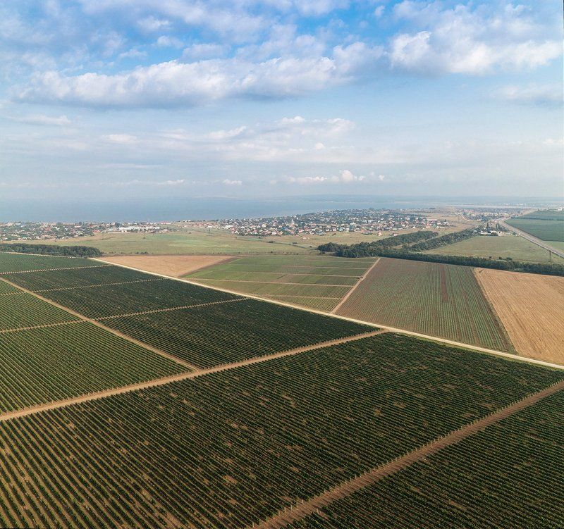 геометрия, высота Геометрия виноградного поляphoto preview