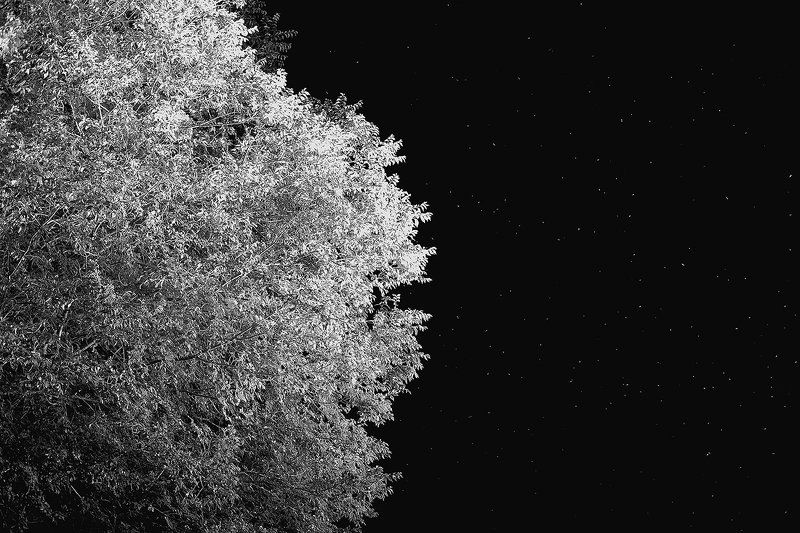 Treestarphoto preview