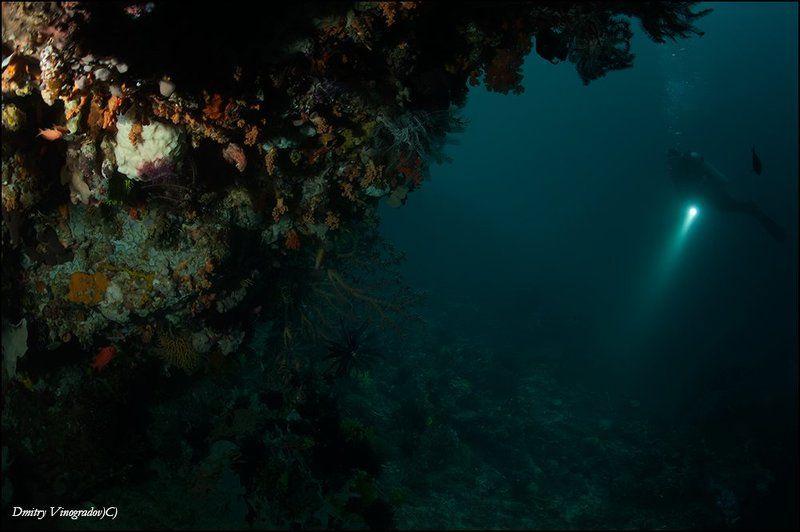 Пейзаж с коралламиphoto preview