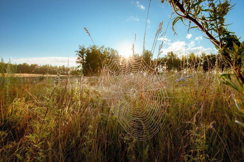 О солнце, попавшем в ловушкуphoto preview