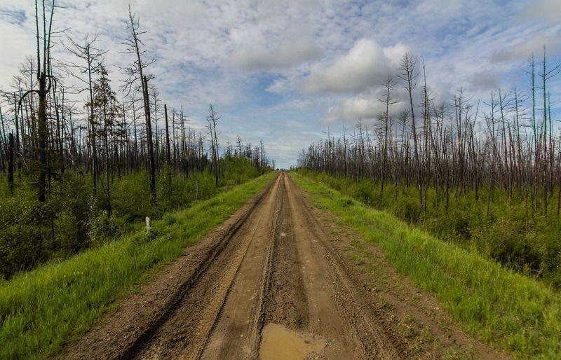 якутия, вечная мерзлота, лес, болото, сибирь Якутия - отступление вечной мерзлоты. Дорога.photo preview