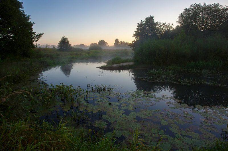 восход, заводь, заря, кувшинки, лето, река, солнце, трава, туман, утро, пейзаж, саров Утренняя заводьphoto preview