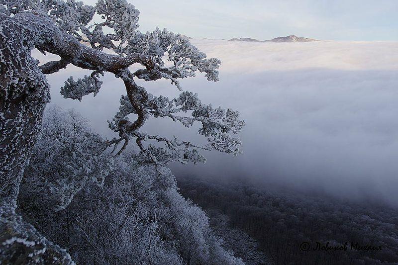 зимняя красавицаphoto preview