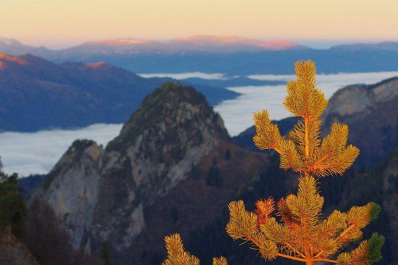 пейзаж с ветвью сосныphoto preview