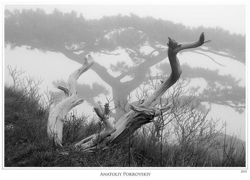 дерево, мертвое дерево, туман Непостижимая цепкость древесной памятиphoto preview