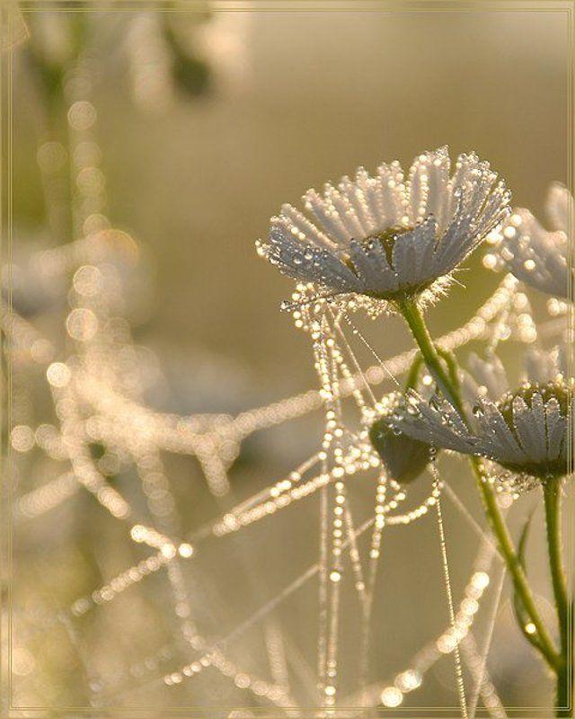 луг, утро , цветы Утренняя...photo preview