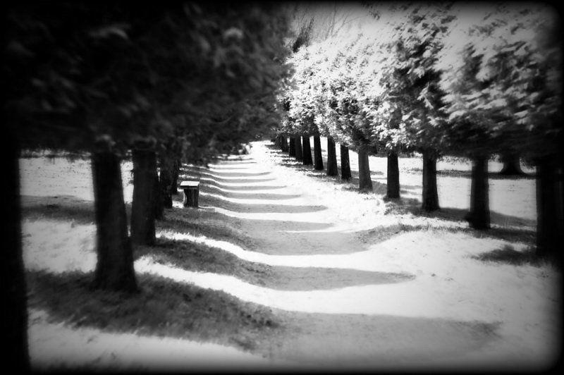 парк Старый паркphoto preview