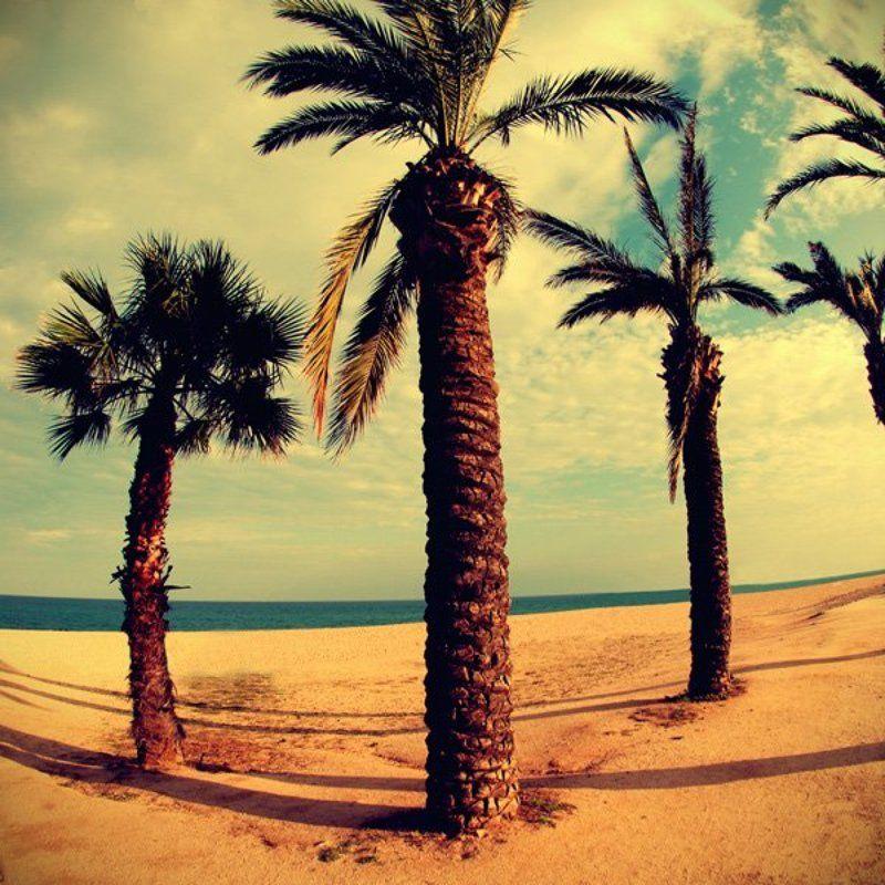 Palm beachphoto preview