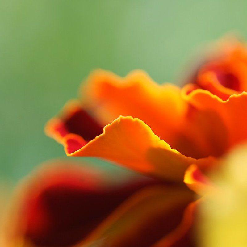 цветы, макро оранжевенькоphoto preview