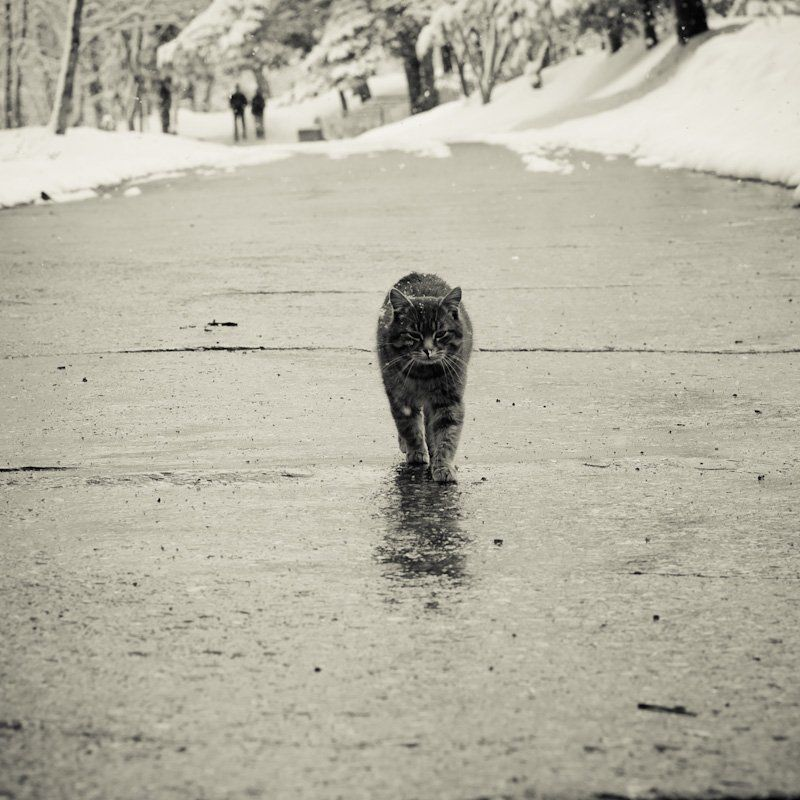 зима, кот Падал прошлогодний снегphoto preview