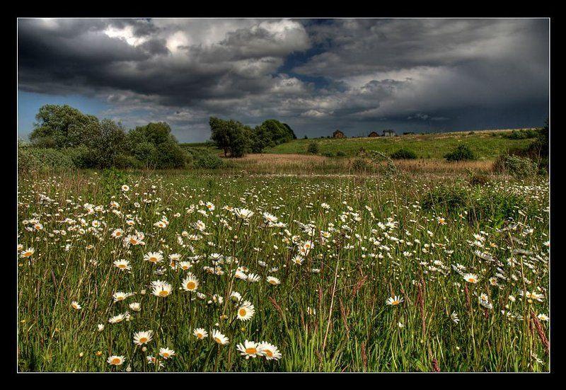 поле, ромашки, гроза, цветы, дождь Перед грозойphoto preview