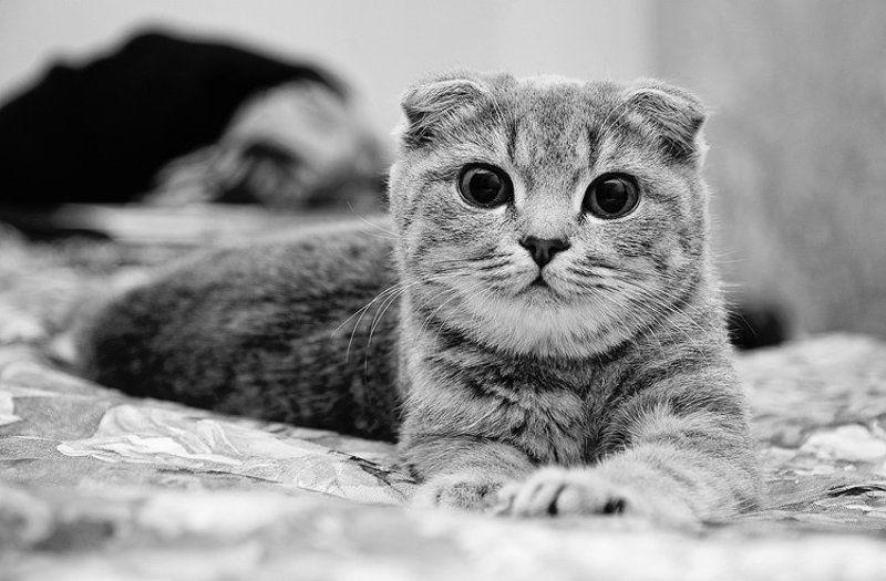 аристоша, животные, кот, чб Аристотельphoto preview