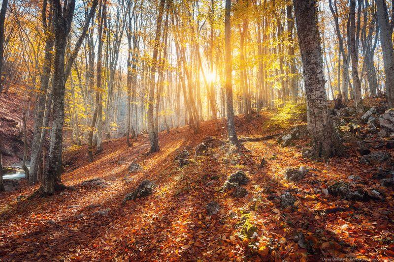 Пейзаж, крым, большой каньон, осень, лес, деревья, закат, солнце, лучи, путешествие, горы, скалы, камни, красный Осенний лес в Большом каньоне Крымаphoto preview