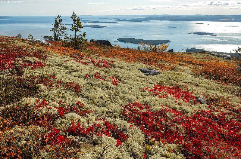 осень, пейзаж, кольский полуостров Осенние ковры.photo preview