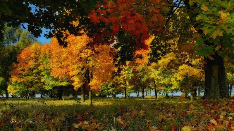 Autumn, Leaves, Nature, Rpowroznik, Trees autumn leaves...photo preview