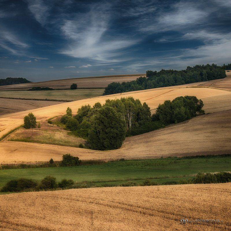 Fields, Landscape, Rpowroznik, Trees fields...photo preview