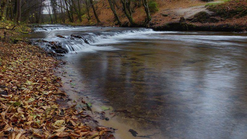 Autumn, Nature reserve, Rebizanty, River, Roztocze, Rpowroznik, Tanew nature reserve...photo preview