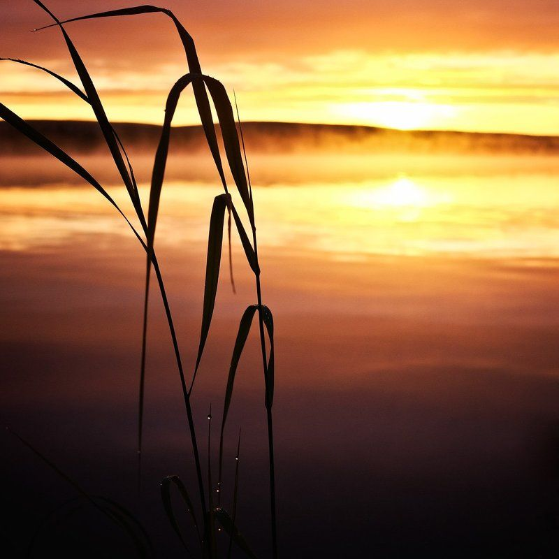 север кольский заполярье лапландия рассвет Рассвет на Пермус-озереphoto preview