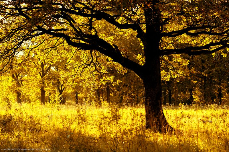 Fall, Foliage, Forest, Landscape, Nature, Oaks, Tree, Yellow Autumnphoto preview