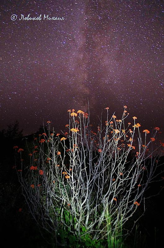 ночные рябиныphoto preview