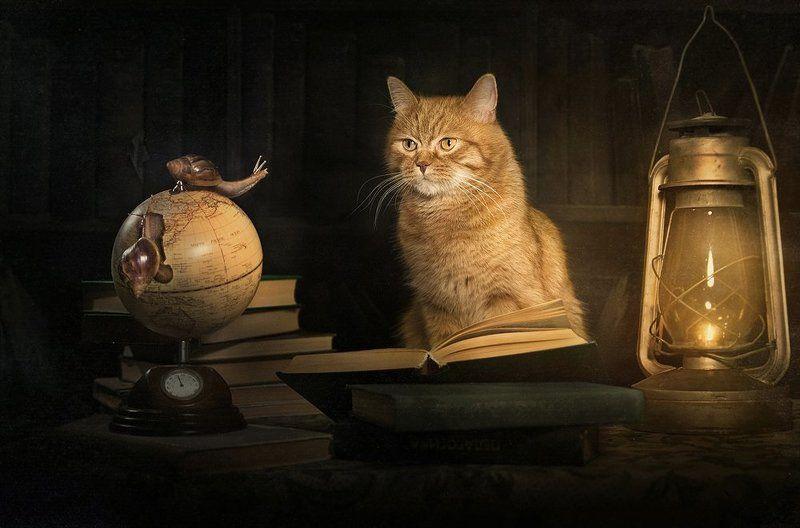 рыжий, кот, улитки, библиотека, книги, глобус Сказочник...photo preview