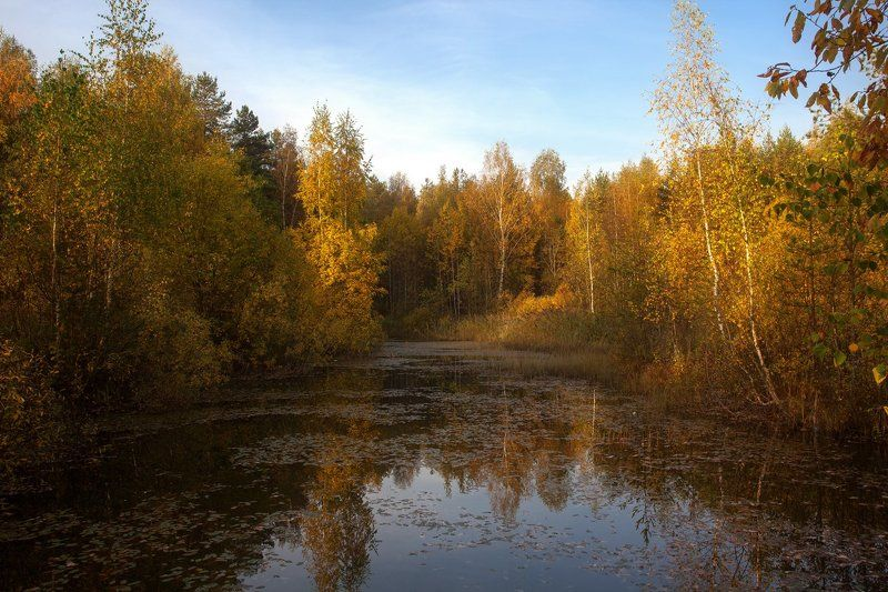 Осенний уголокphoto preview