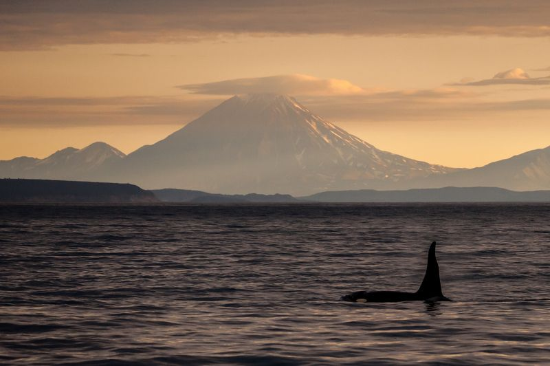 Косатка, дикая природа, тихий океан, вулкан, камчтк Навстречу вулканамphoto preview