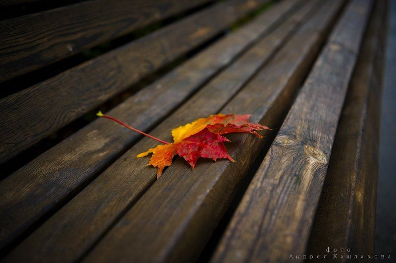 осень, лист, скамейка Здравствуй, ОСЕНЬ...photo preview