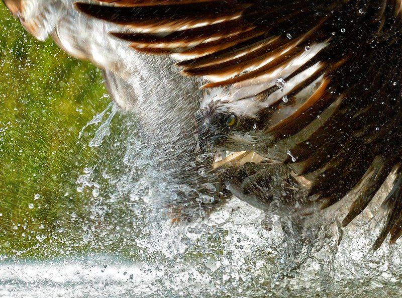 вырваться из водыphoto preview