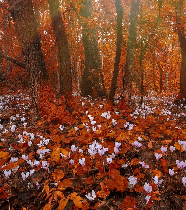 landscape, nature, flowers, focus stack, Bulgaria, Canon 6D Deep Forest Magicphoto preview