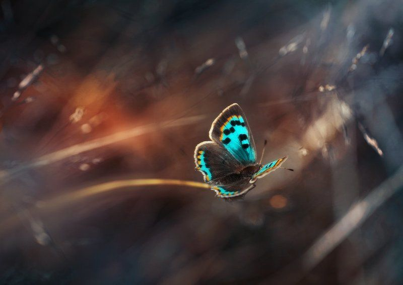 И снова бабочкиphoto preview