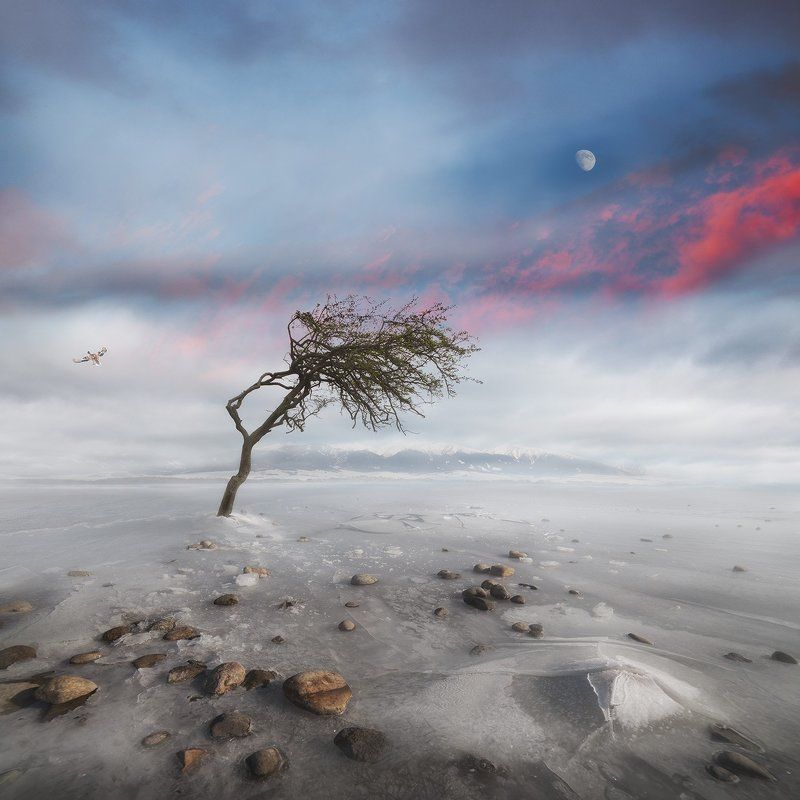 Conceptual, Landscape, Moon, Story Bright Side Of The Moonphoto preview