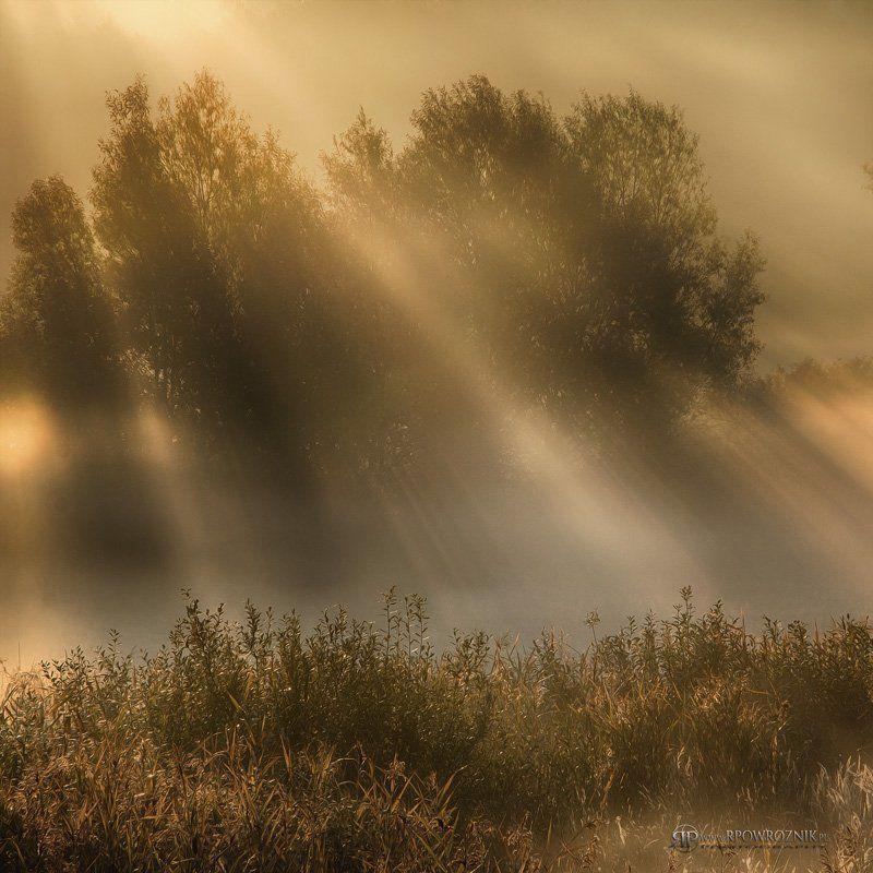 Fog, Light, Morning, Rpowroznik, Sunlight sunlight...photo preview