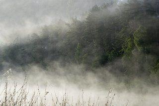 Лес в тумане на Угре