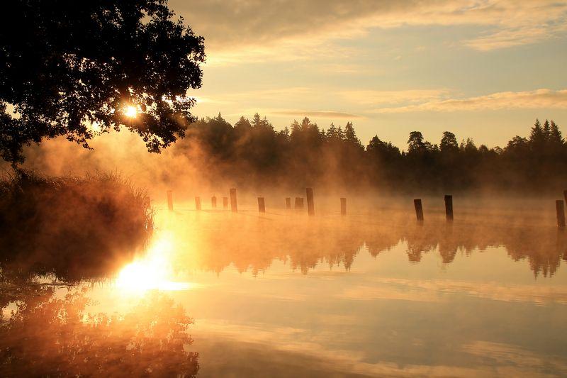 fog, lake Morning fogphoto preview