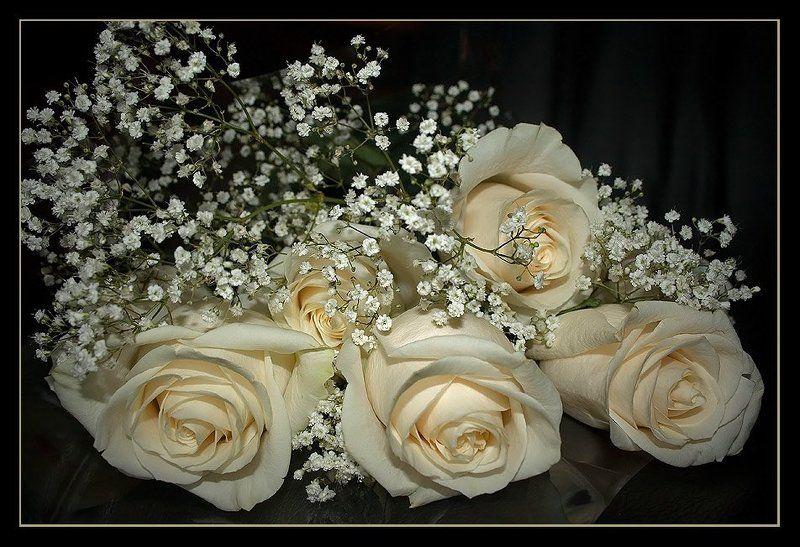 роза, розы, чайная, букет, цветы, праздник, запах, 8, марта, На восьмое марта дарят всем подарки...photo preview