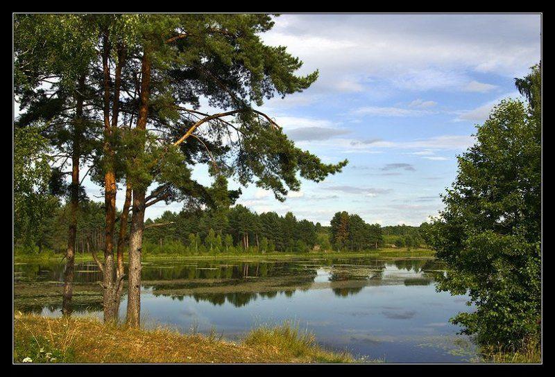 Река сосны утро тишина ~ 050 ~photo preview