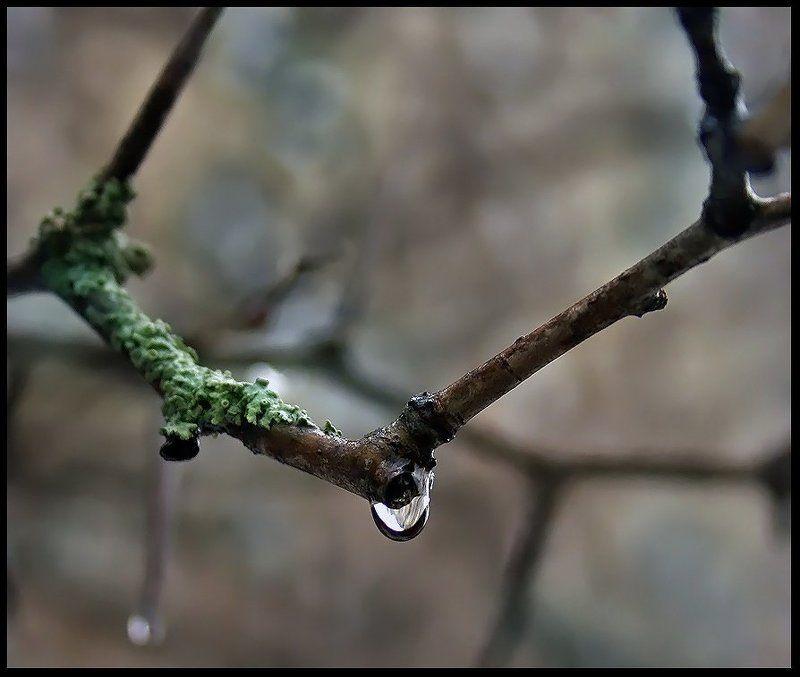 слеза, весна, капля, вода Весенняя слезаphoto preview