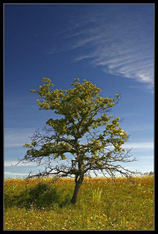 Дерево облако ~ 060 ~photo preview