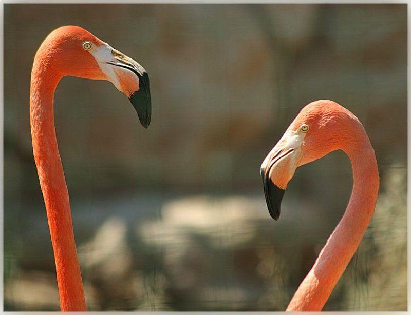 фламинго hdd Там же...photo preview