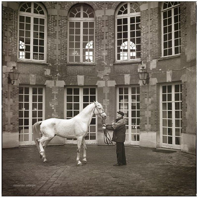 лошадь, лошади, конь, horses, horse, equi, zabegin, france, франция Князьphoto preview